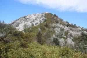 桜満開初雪の日留賀岳