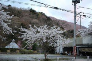 宿泊地板室温泉の桜