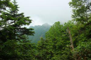 コルの向かいには、切り立った第7座鋸山山頂