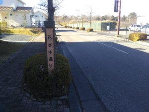 街路樹と通り