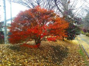 ふれあい通りの紅葉