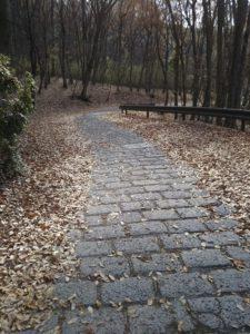 林の中の石畳