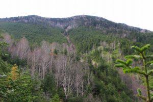 栃木百名山第37座錫ヶ岳:丸沼ロープウェイ利用の日帰りルート