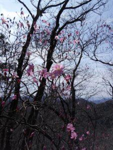 栃木百名山第99座仙人ヶ岳:トレイルランを眺めながら