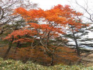 栃木百名山を楽しもう!:絶景紅葉の山③袈裟丸山