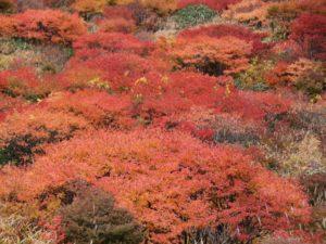 栃木百名山を楽しもう!:絶景紅葉の山①那須岳