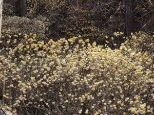 栃木百名山を楽しもう!:花の山②鶏足山