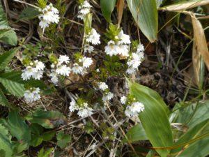 栃木百名山で出会った花々:季節順