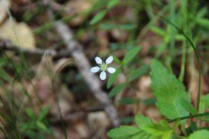 登山で出会った花々:スライドショー