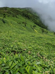 一瞬の雲上の楽園:赤薙山