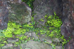 栃木百名山:ヒカリゴケに出会った上り、ビビりまくった東陵下りの古賀志山
