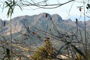 栃木百名山:多気山で絶景の眺望堪能(密を避けて初詣でを兼ねて)